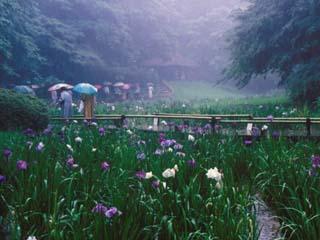aoyama_19910620-4.jpg