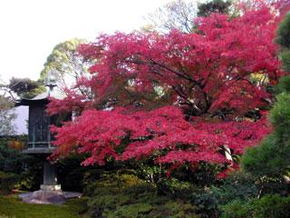 aoyama_20101123-01.jpg