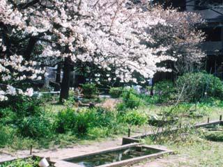 edogawa_19910405-02.jpg