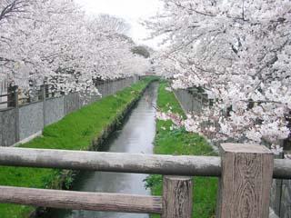 ichikawa_20060402-1.jpg