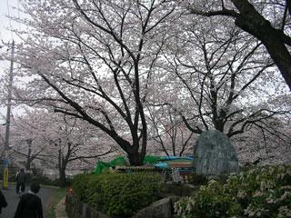 ichikawa_20080330-2.jpg
