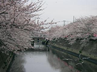ichikawa_20080330-3.jpg