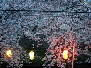 ichikawa_20080330-4.jpg