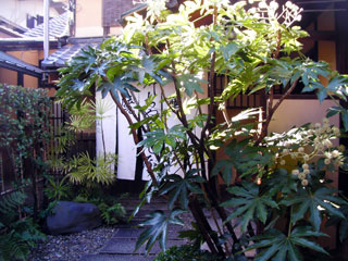 kyoto_20090111-3.jpg