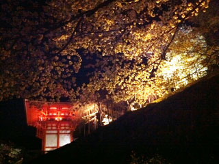 kyoto_20110407-02.jpg