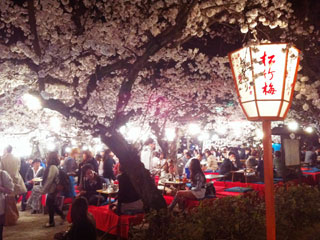 kyoto_20110407-05.jpg