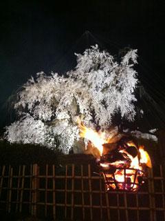 kyoto_20130331-15.jpg