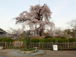 kyoto_20130401-02.jpg