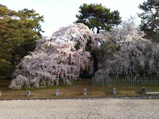 kyoto_20130401-04.jpg