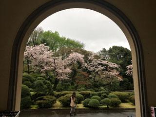 meguro_20170409-03.jpg