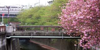 nakameguro_20070417-1.jpg
