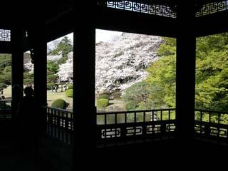 shinjyuku_20070330-3.jpg