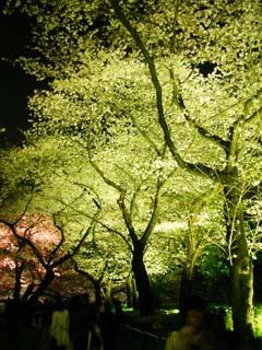 tokyo_20070329-1.jpg