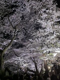 tokyo_20130328-05.jpg