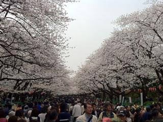 ueno_20130323-02.jpg