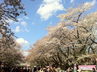 ueno_20140405-01.jpg