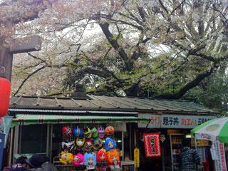 ueno_20140405-03.jpg